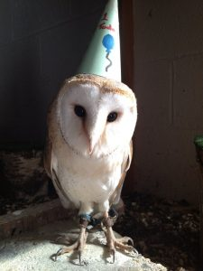 Barn Owl at your Birthday Party, APCH
